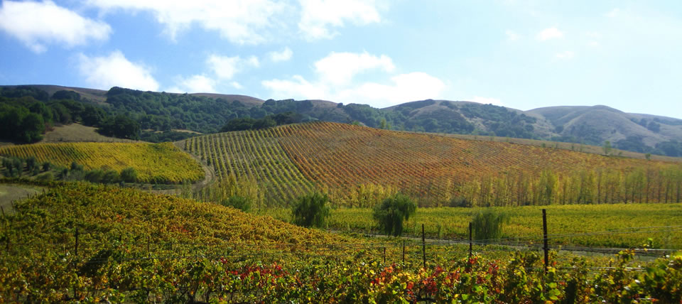 Sonoma Wine Country Recommendations Sonoma County
